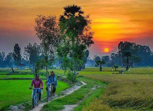 Rice paddies Kampuchea Cambodia 2559